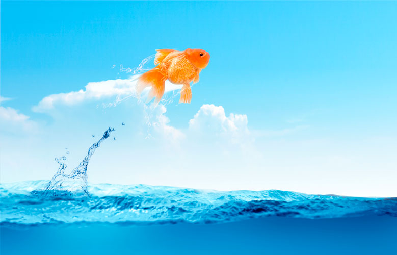 oceano azul marketing